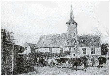 eglise-et-vaches